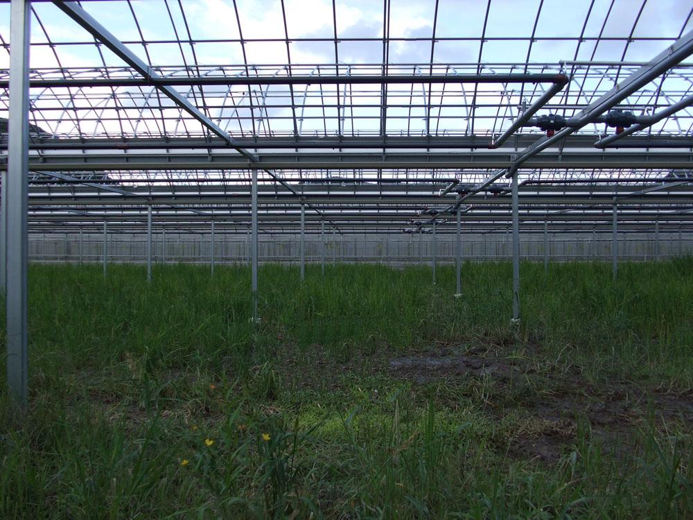 園芸用ハウス,温風暖房機,温水器,エロフィンチューブの昭和産業が施工した佐川町園芸用ハウスの写真2